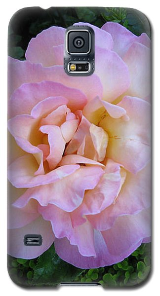 Ritzy Pink Rose Galaxy S5 Case