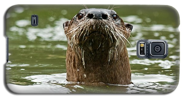 River Otter 1 Galaxy S5 Case