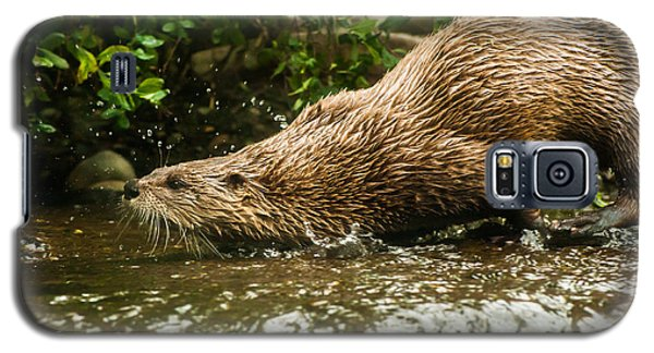 River Otter Galaxy S5 Case