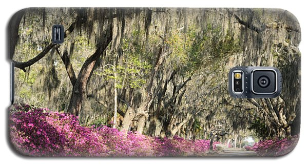 Road With Azaleas And Live Oaks Galaxy S5 Case