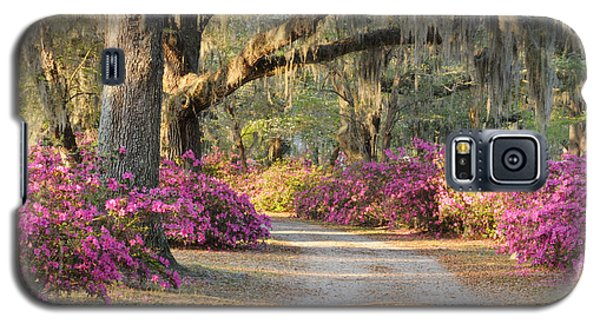Road With Live Oaks And Azaleas Galaxy S5 Case