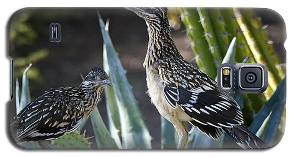 Roadrunners At Play  Galaxy S5 Case