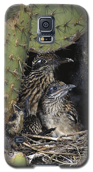 Roadrunners In Nest Galaxy S5 Case by Anthony Mercieca