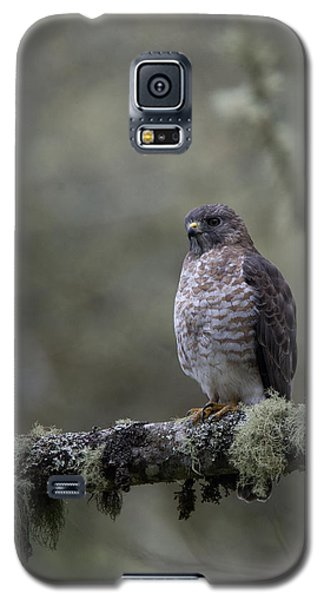 Roadside Hawk On Lichen-covered Branch 1 Galaxy S5 Case