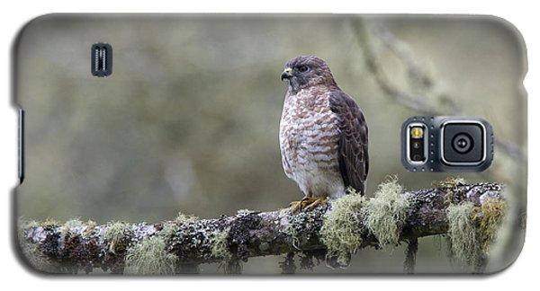 Roadside Hawk Perched On A Lichen-covered Branch 2 Galaxy S5 Case