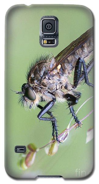 Robber Fly Asilinae Close Up Galaxy S5 Case by Jivko Nakev