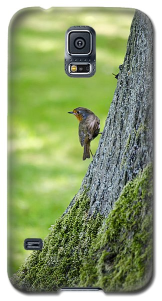 Robin At Rest Galaxy S5 Case