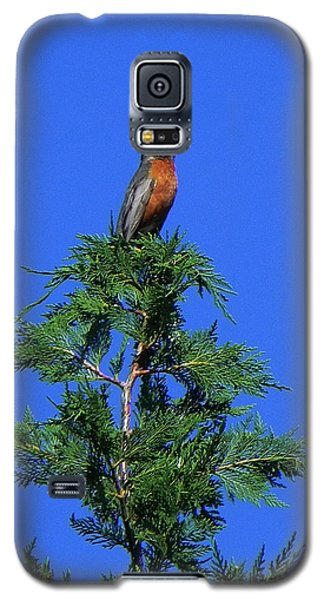 Robin Christmas Tree Topper Galaxy S5 Case