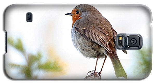 Robin On A Pole Galaxy S5 Case