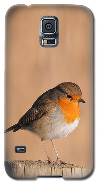 Robin Galaxy S5 Case