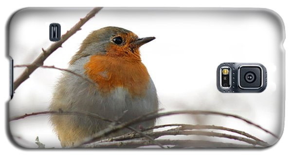 Robin Red Breast Galaxy S5 Case