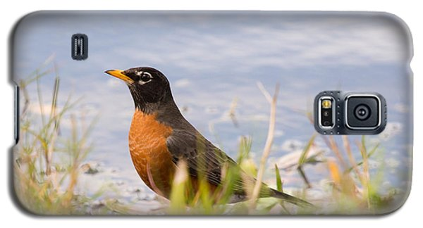 Robin Viewing Surroundings Galaxy S5 Case