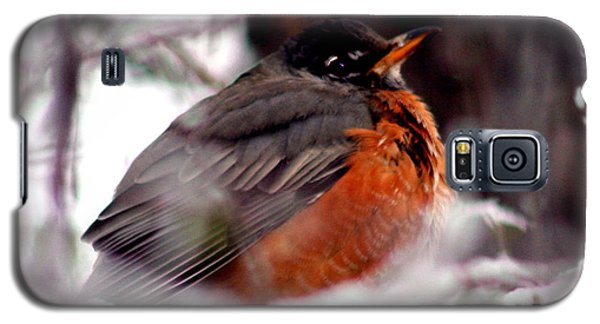 Galaxy S5 Case featuring the photograph Robins' Patience by Lesa Fine