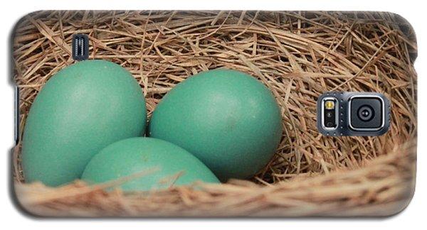Robins Three Blue Eggs Galaxy S5 Case
