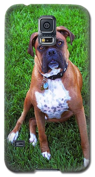 Galaxy S5 Case featuring the photograph Rocco by Philomena Zito