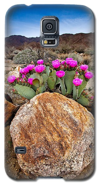 Desert Galaxy S5 Case - Rock And Beavertail by Peter Tellone