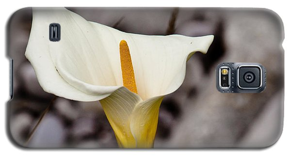 Rock Calla Lily Galaxy S5 Case by Melinda Ledsome