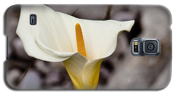 Rock Calla Lily Galaxy S5 Case