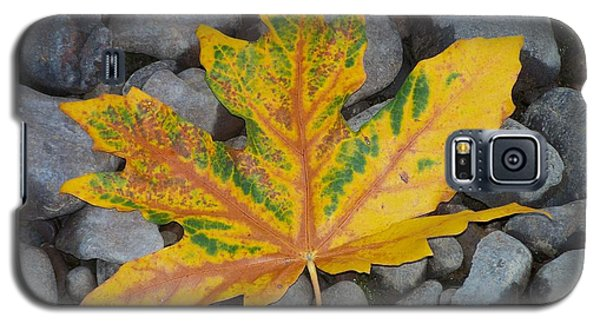 Galaxy S5 Case featuring the photograph Rock Creek Leaf by Chalet Roome-Rigdon