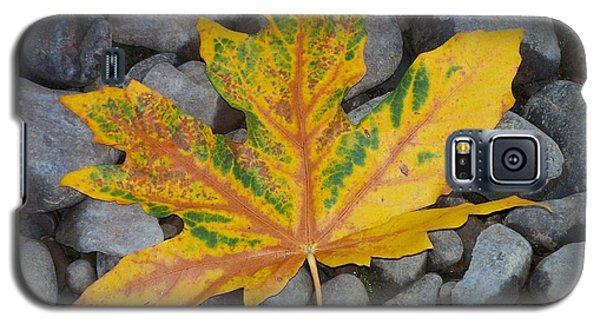 Rock Creek Leaf Galaxy S5 Case by Chalet Roome-Rigdon