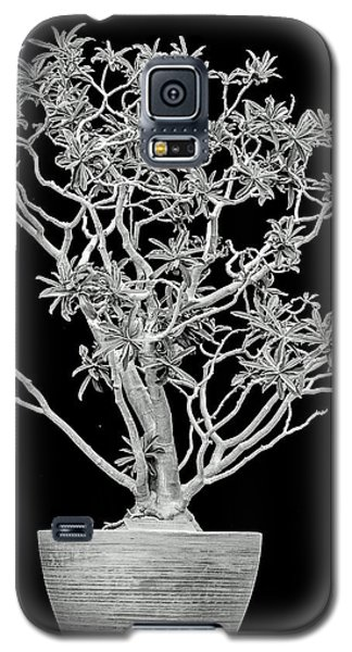 Galaxy S5 Case featuring the photograph Rock Fig  by Elaine Malott