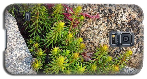Galaxy S5 Case featuring the photograph Rock Flower by Meghan at FireBonnet Art