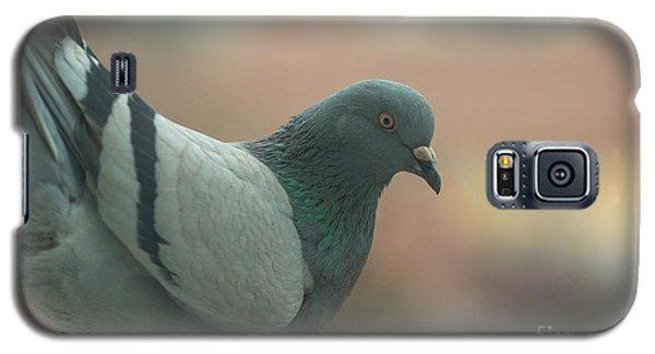 Rock Pigeon Galaxy S5 Case by Jivko Nakev
