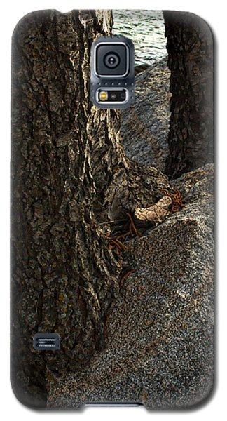 Rockin Tree Galaxy S5 Case