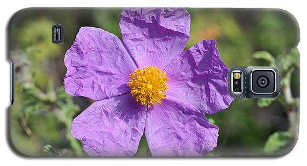 Galaxy S5 Case featuring the photograph Rockrose Flower by George Atsametakis