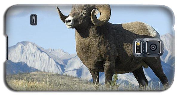 Rocky Mountain Big Horn Sheep Galaxy S5 Case by Bob Christopher