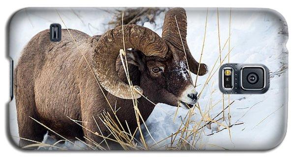 Rocky Mountain Bighorn Sheep Galaxy S5 Case