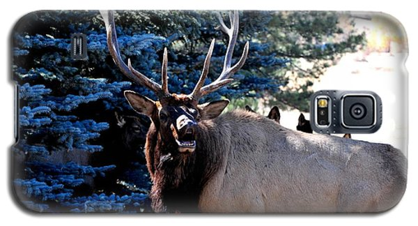 Rocky Mountain Elk - Flehmen Response Galaxy S5 Case by Marilyn Burton