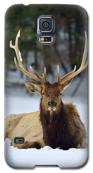 Rocky Mountain Elk Galaxy S5 Case