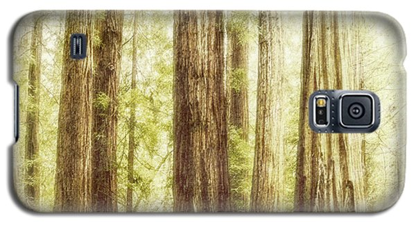 Romantic Forest Muir Woods National Monument California Galaxy S5 Case by Marianne Campolongo
