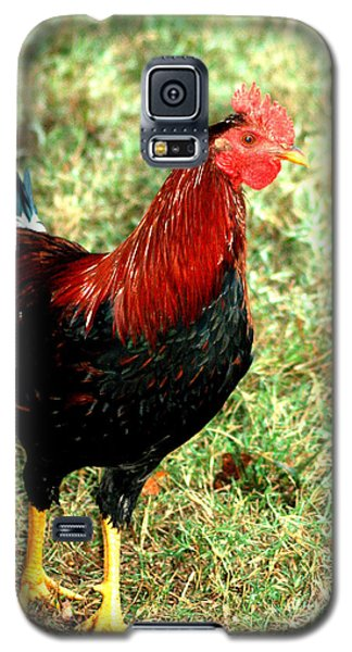 Galaxy S5 Case featuring the photograph Rooster Red by Lesa Fine