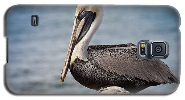 Roosting Pelican Galaxy S5 Case