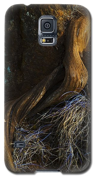 Tree Root Galaxy S5 Case