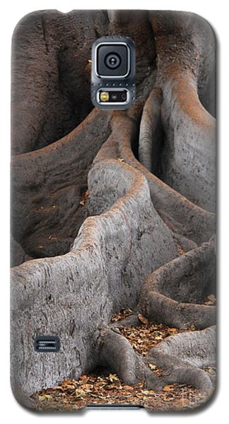 Roots Of The Fig Galaxy S5 Case