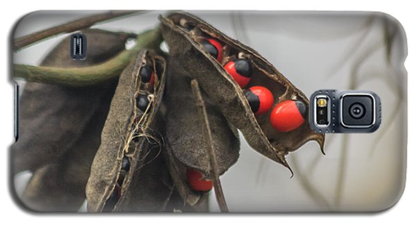 Rosary Pea Galaxy S5 Case by Jane Luxton