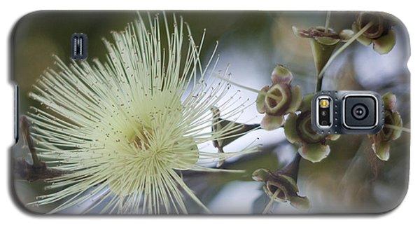 Rose Apple Blossom Galaxy S5 Case by Kerryn Madsen-Pietsch