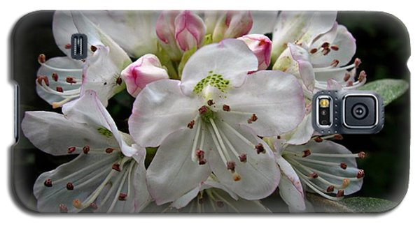Rose Bay Rhododendron Galaxy S5 Case