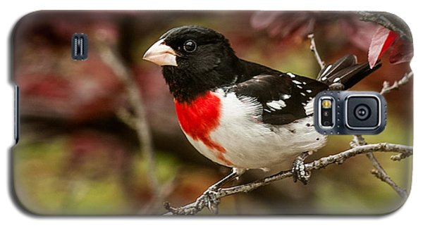 Rose- Breasted Grosbeak 1 Galaxy S5 Case