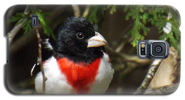 Rose Breasted Grosbeak Perched Galaxy S5 Case