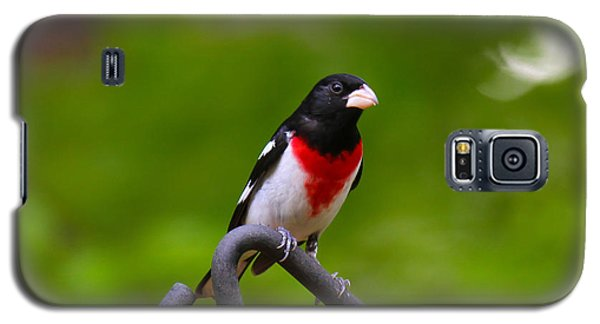 Rose Breasted Grosbeak Galaxy S5 Case