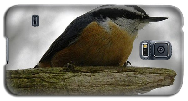Rose Breasted Nuthatch Galaxy S5 Case