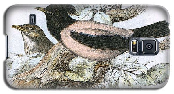 Rose Coloured Starling Galaxy S5 Case by English School