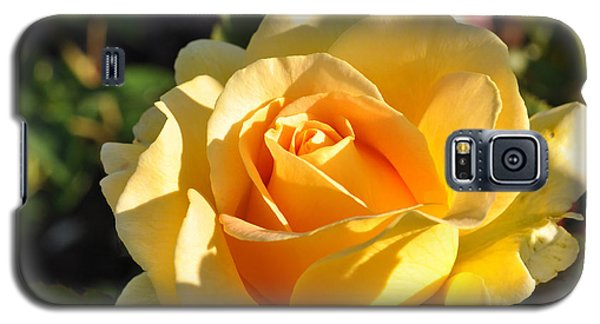 Galaxy S5 Case featuring the photograph Rose - Honey Bouquet by Sabine Edrissi