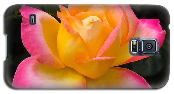 Galaxy S5 Case featuring the photograph Rose by Janis Knight