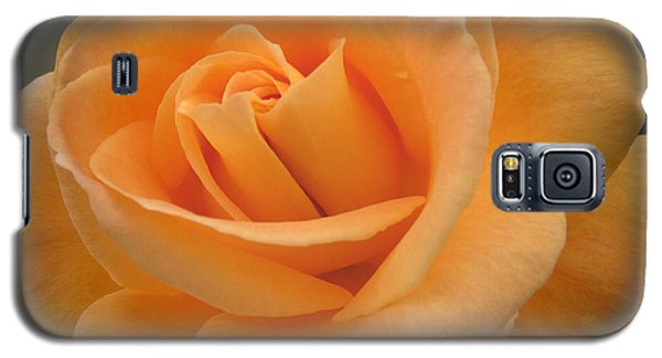 Galaxy S5 Case featuring the photograph Rose by Laurel Powell