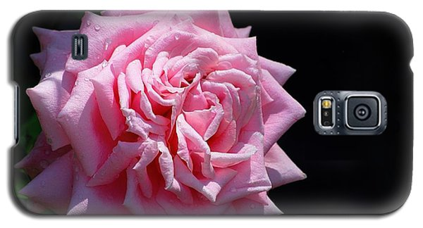 Galaxy S5 Case featuring the photograph Rose by Ludwig Keck